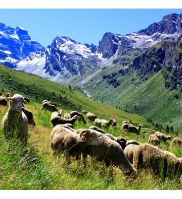 Balade au coeur des Hautes-Alpes
