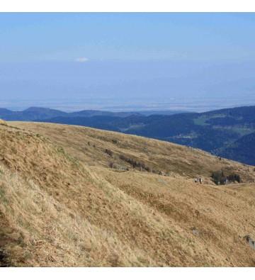 Randonnée sentier des roches les plus alpin de Vosges.