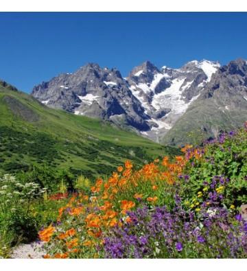 Parc National des Ecrins du 25 au 28 mai ou du 6 au 9 juillet 2017