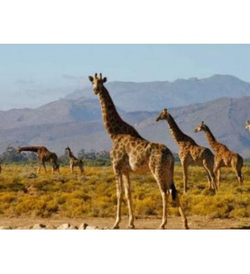 CIRCUIT PHOTO DÉCOUVERTE EN AFRIQUE DU SUD 12 jours / 10 nuits
