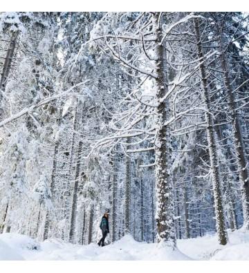 Sortie raquettes à neige au Breitfirst  sur demande