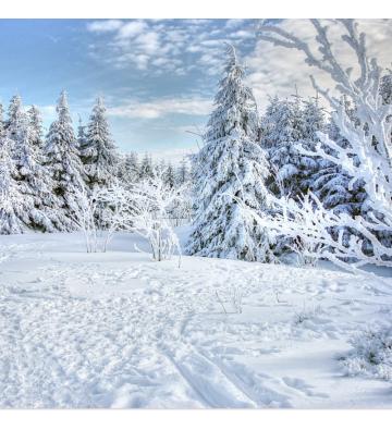 Sortie raquettes à neige au Thannerhubel