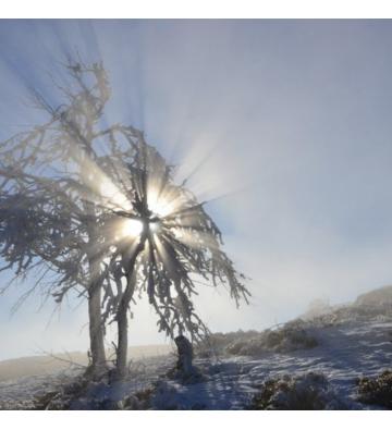 Sortie Raquettes à neige sur les chaumes du Rossberg