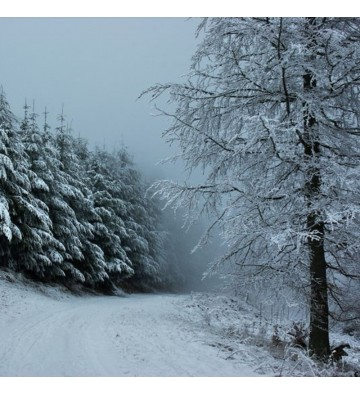 Sortie Raquettes à neige au Storkenkopf