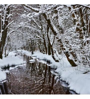 Sortie Raquettes à neige à la cascade de Bruscher