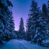Balade en raquettes à neige coucher du soleil sur le Ballon d'Alsace et découverte du ciel étoilé