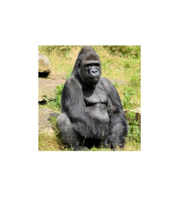 Découverte du zoo d'amnéville