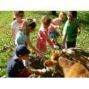 Sortie scolaire : à la découverte de la ferme.