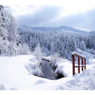 Sortie Raquettes à neige sur les chaumes du Grand Ventron