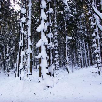 Sortie Raquettes à neige Découverte du Neuntelstein