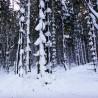 Balade en raquettes à neige au Neuntelstein
