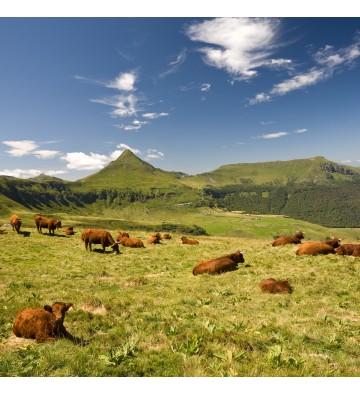 Randonnée sur les 4 massifs volcanique d'Auvergne.